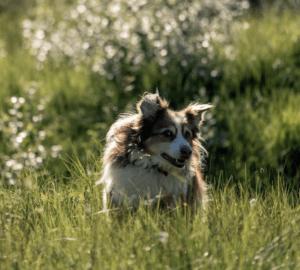 hund som kommer på innkalling